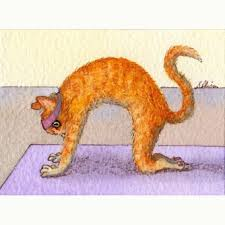 yoga for chronic fatigue cat pose  aroga yoga